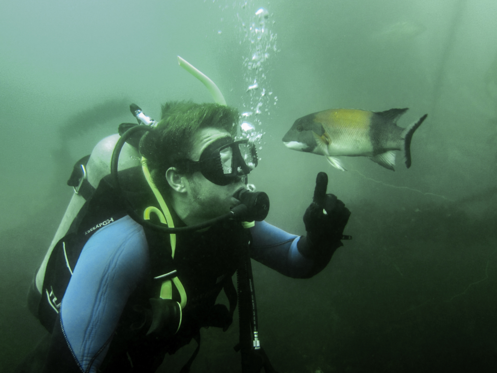 Scuba certification snorkel san diego group instruction 3 or more people per class 1betcityfo Gallery