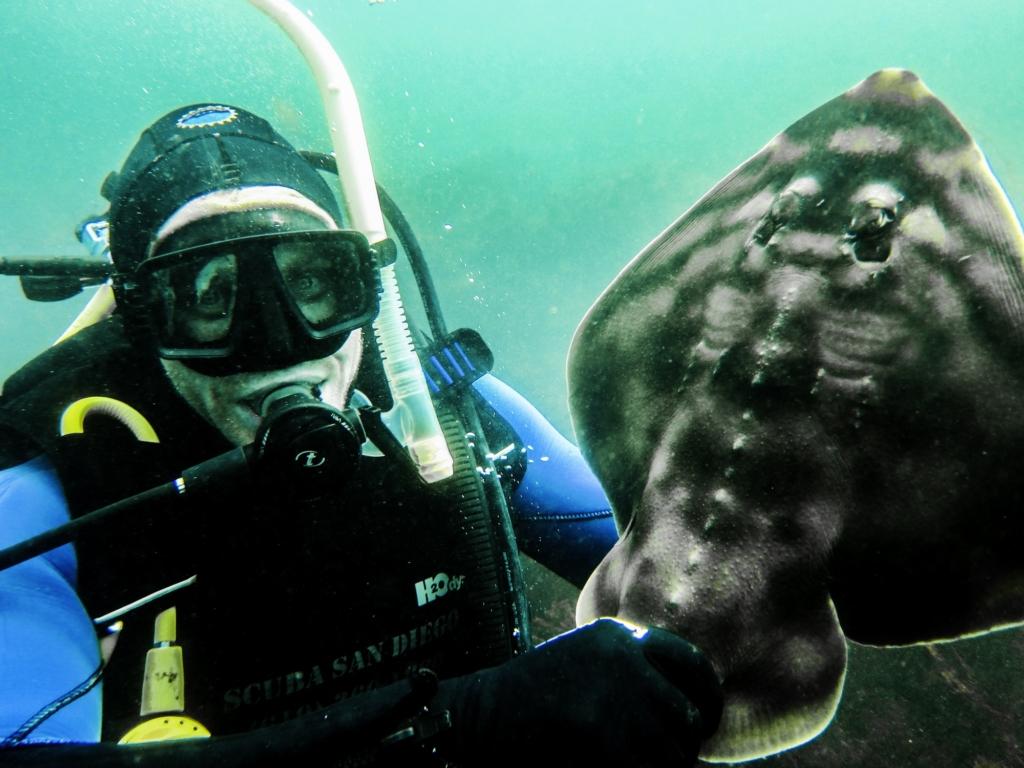 Guitar-Fish-And-Diver (1 of 1)