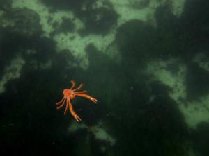 snorkel (417 of 428)